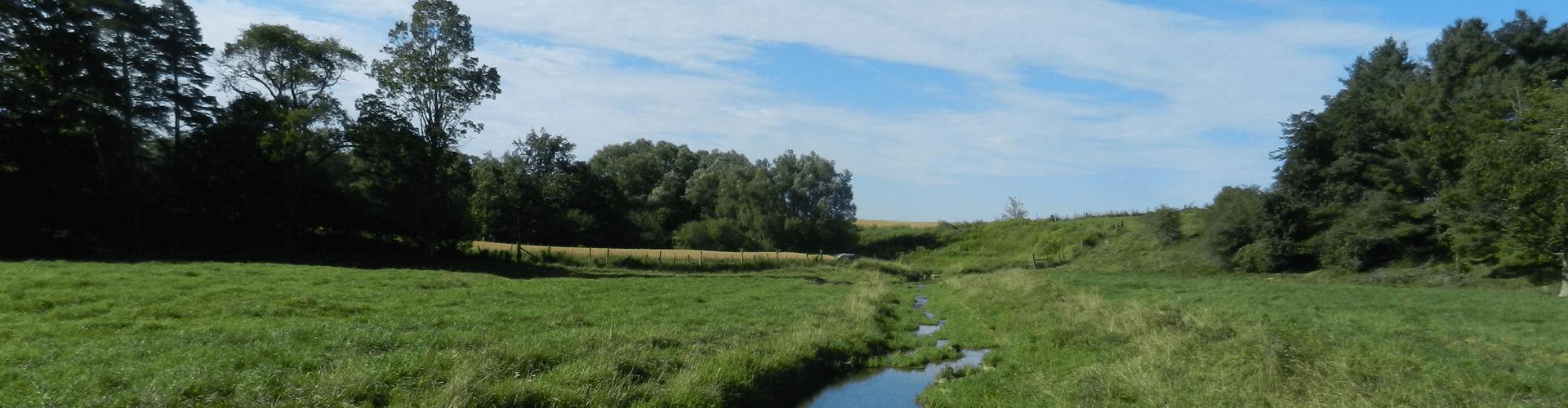 stream running through a field
