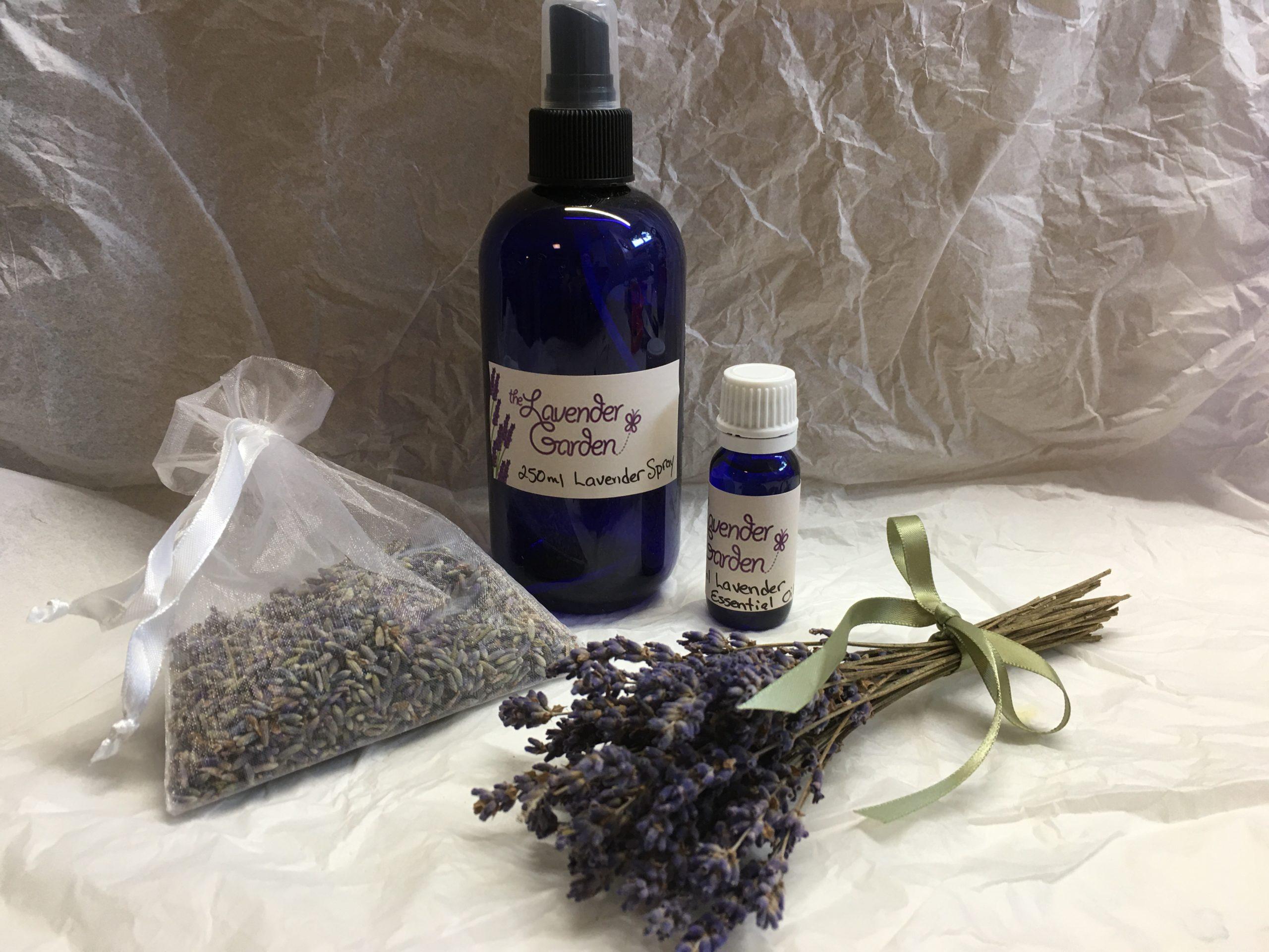 Creative Art Program – I Love Lavender
